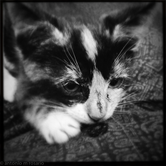 iPhone 120615 1792 Mercedes the Kitten gets the #Hipstamatic Treatment
