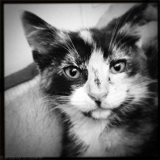 iPhone 120615 1794 Mercedes the Kitten gets the #Hipstamatic Treatment
