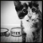 iPhone 120615 1801 150x150 Mercedes the Kitten gets the #Hipstamatic Treatment