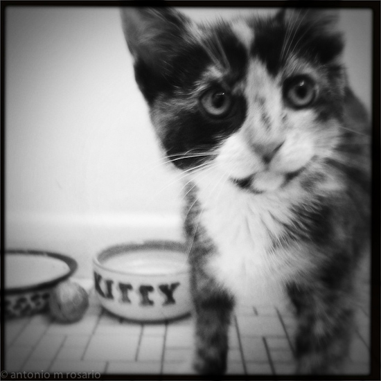 iPhone 120615 1801 Mercedes the Kitten gets the #Hipstamatic Treatment