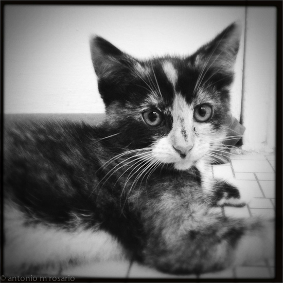 iPhone 120615 1802 Mercedes the Kitten gets the #Hipstamatic Treatment