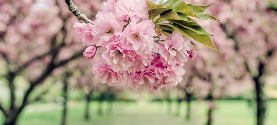 BBG Spring