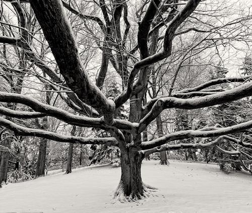 A Winter Forgotten
